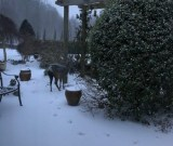 A visiting deer in the snow at Dorothy House March 2018